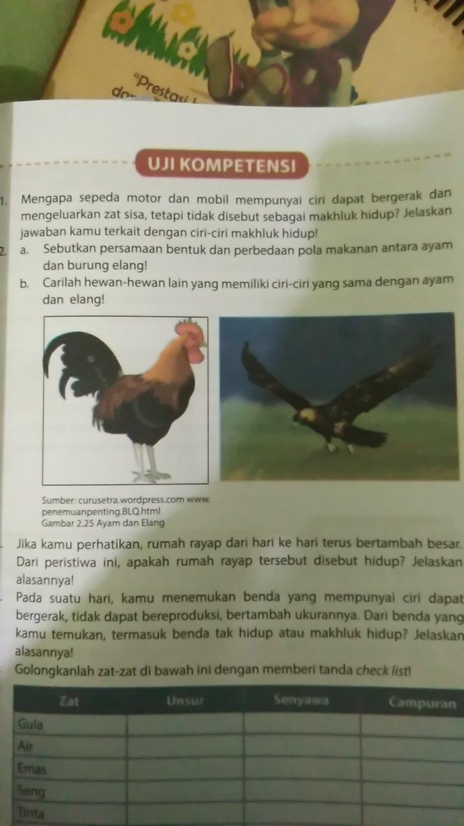 Sebutkan Persamaan Bentuk Dan Perbedaan Pola Makan Antara Ayam Dan Burung Elang : sebutkan, persamaan, bentuk, perbedaan, makan, antara, burung, elang, Nomor, Secepatnya, Pleasee, Brainly.co.id