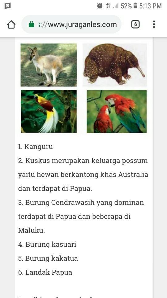 Ciri Ciri Fauna Tipe Australis : fauna, australis, Wilayah, Penyebaran, Fauna, Australis, Brainly.co.id