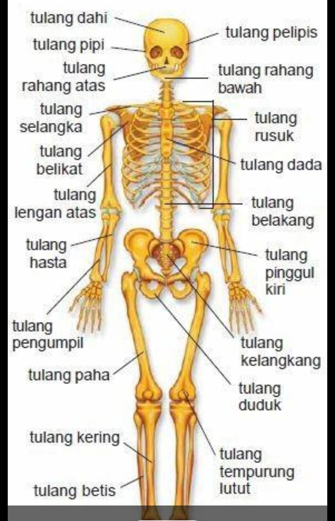 Fungsi Tulang Tempurung Lutut : fungsi, tulang, tempurung, lutut, Fungsi, Semua, Tulang, Tersebut?, Pleaseee., Tolong, Jawabbb...., Soalnya, Senin, Brainly.co.id