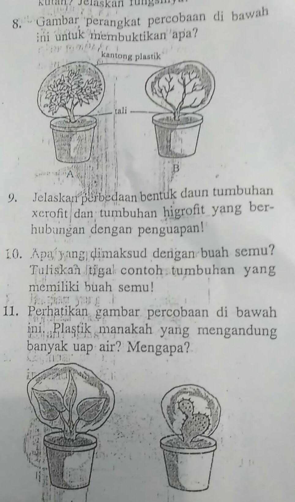 Tumbuhan Hidrofit Beserta Contoh Gambarnya : tumbuhan, hidrofit, beserta, contoh, gambarnya, Contoh, Gambar, Tumbuhan, Higrofit