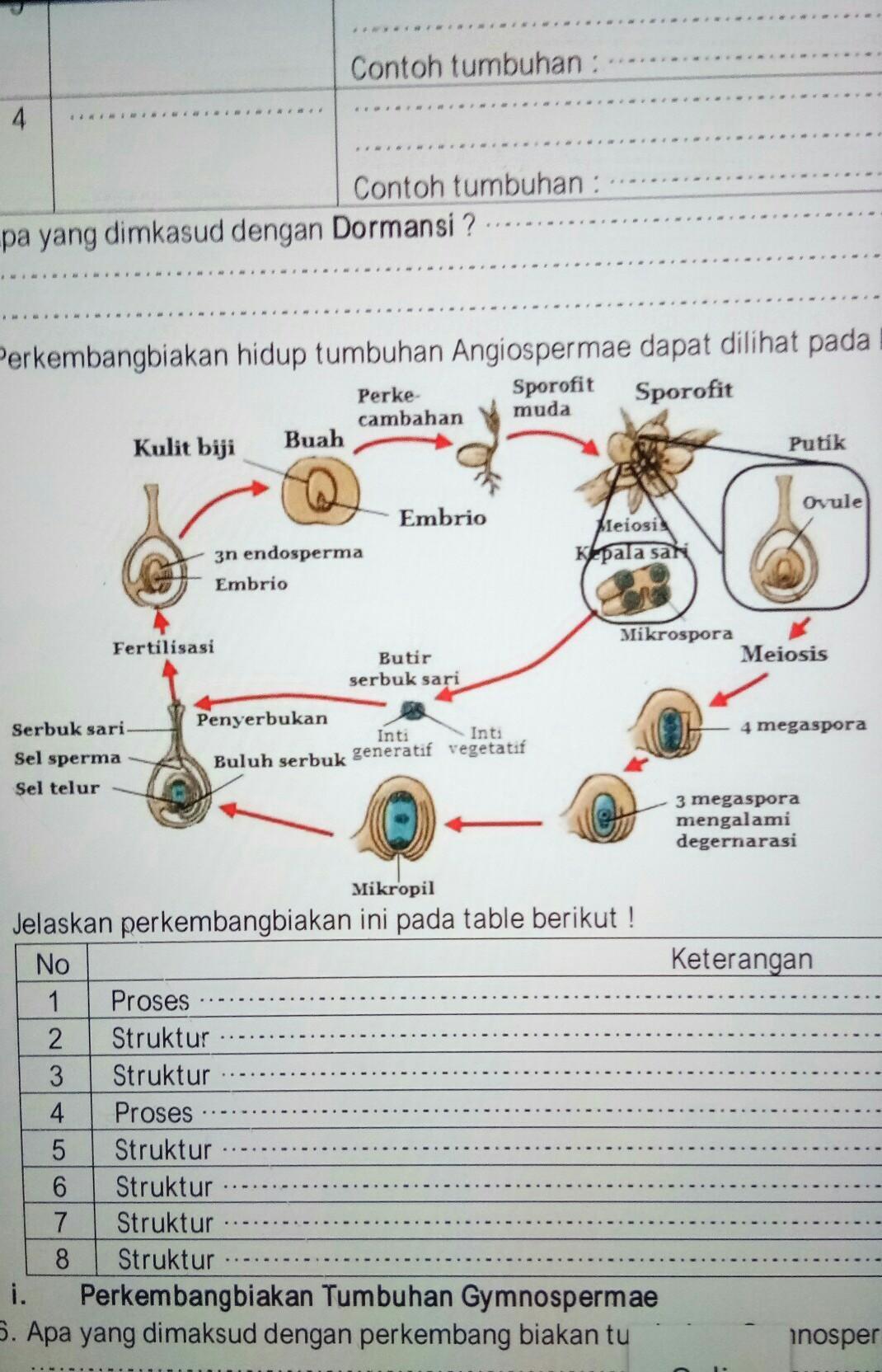 Angiospermae Adalah : angiospermae, adalah, Jelaskan, Pembuahan, Perkembangbiakan, Hidup, Tumbuhan, Angiospermae, Dimaksud, Dengan, Brainly.co.id