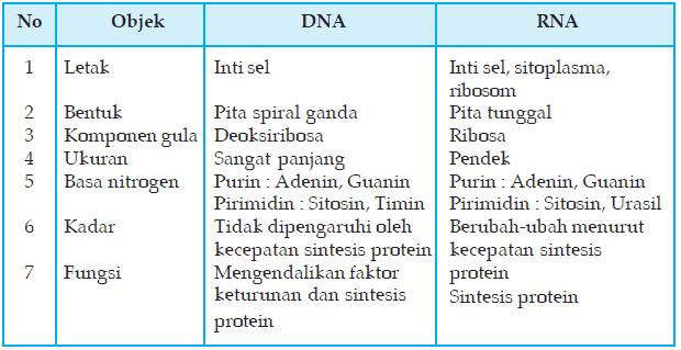 Hasil gambar untuk tabel perbedaan dna dan rna