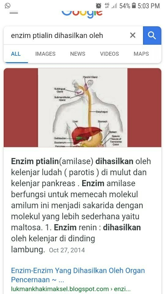 Fungsi Ptialin : fungsi, ptialin, Enzim, Ptialin, Dihasilkan, Brainly.co.id
