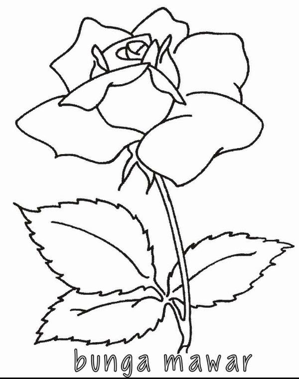 tolong carikan gambar flora dan fauna, soalnya mau saya gambar ...