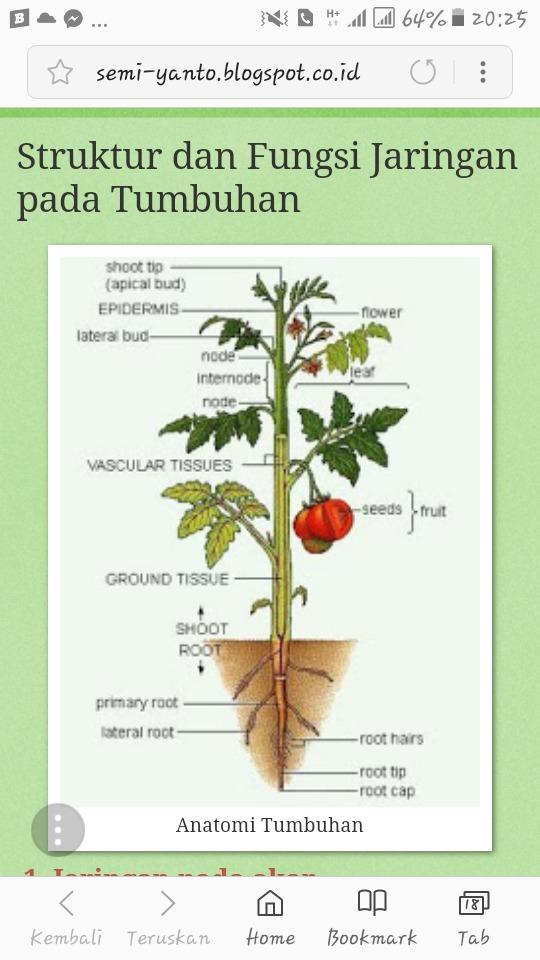 Jaringan Pada Tumbuhan : jaringan, tumbuhan, Bagaimana, Struktur, Jaringan, Tumbuhan?, Identifikasilah, Brainly.co.id