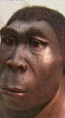 Manusia Purba Pithecanthropus Mojokertensis : manusia, purba, pithecanthropus, mojokertensis, Tuliskan, Beberapa, Manusia, Purba, Fotonya, Brainly.co.id