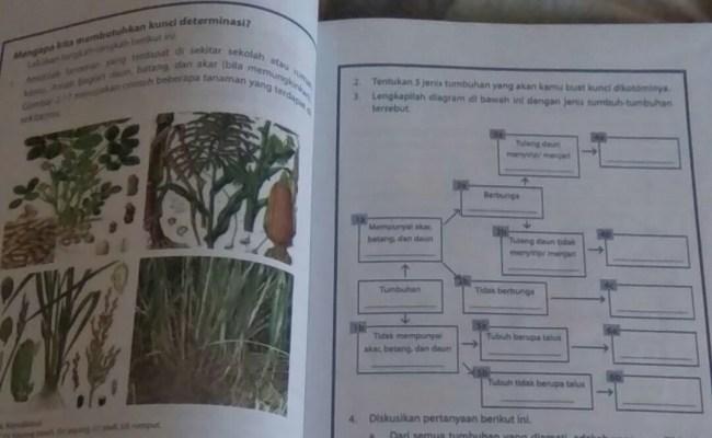 3 Lengkapilah Diagram Di Bawah Ini Dengan Jenis Tumbuh Tumbuhan Tersebut Brainly Co Id Cute766