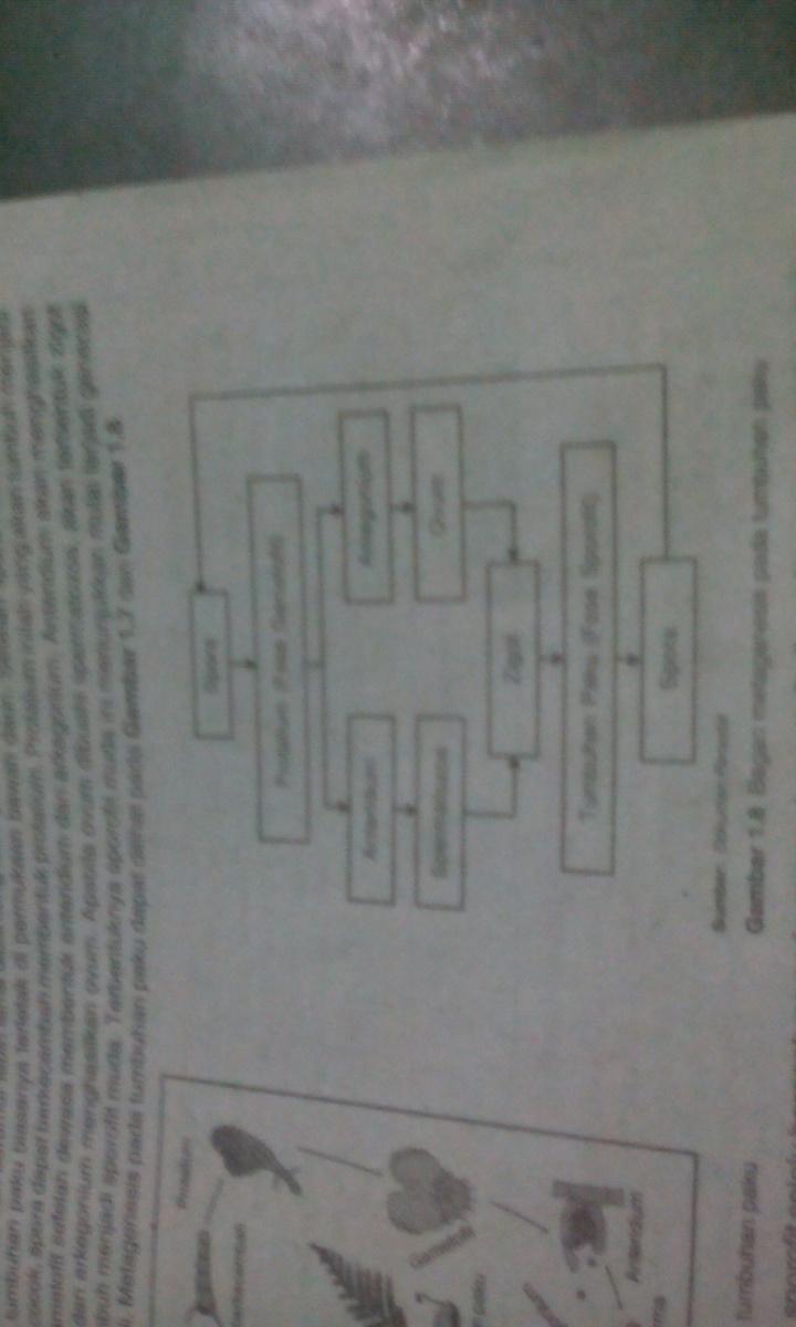 Perbedaan Lumut Dan Paku Dalam Bentuk Tabel : perbedaan, lumut, dalam, bentuk, tabel, Jelaskan, Perbedaan, Metagenesis, Tumbuhan, Lumut, Dengan, Brainly.co.id