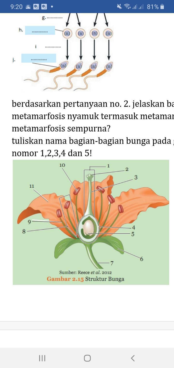 Struktur Bagian Bunga : struktur, bagian, bunga, Tuliskan, Bagian-bagian, Bunga, Gambar, Dibawah,, Tentukan, Fungsi, Bagian, Nomor, Brainly.co.id