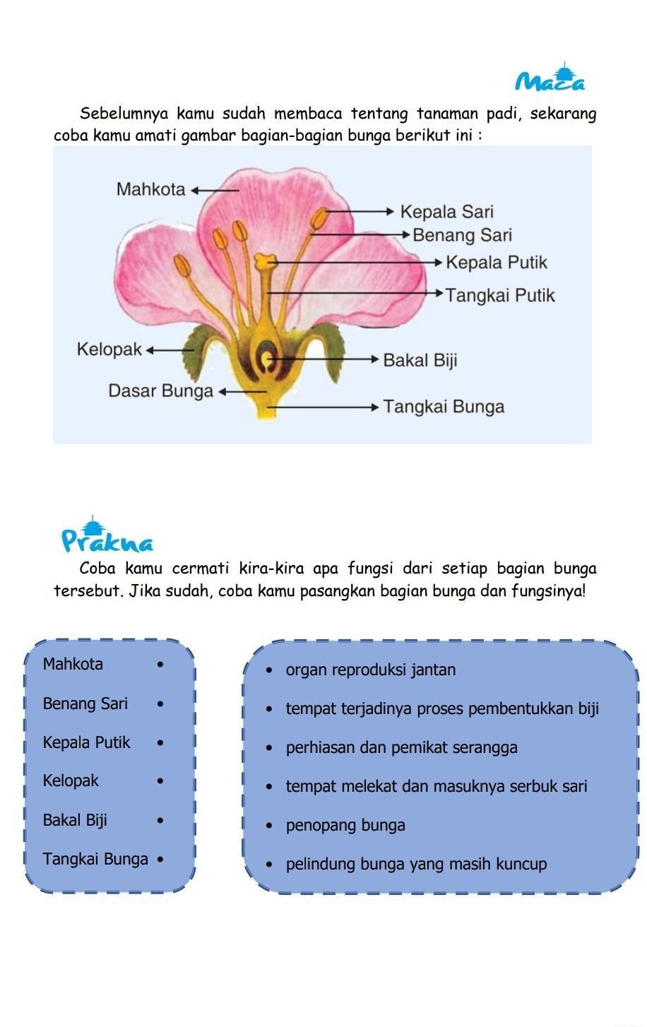 Gambar Bagian Bunga Dan Fungsinya : gambar, bagian, bunga, fungsinya, Bantu, Dong..., Brainly.co.id