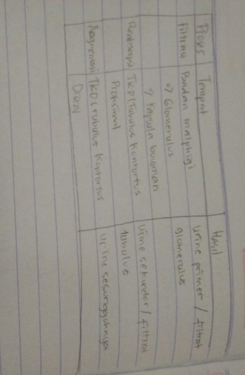 Tabel Pembentukan Urine : tabel, pembentukan, urine, Jelasaskan, Proses, Pembentukan, Urine, Terjadi, Didalam, Ginjal, Dengan, Tabel, Brainly.co.id