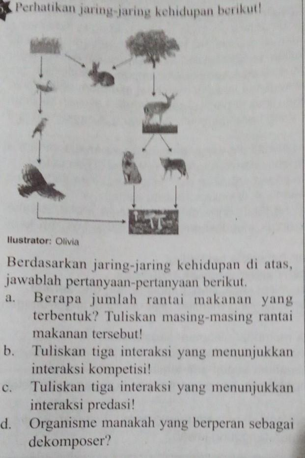 Jaring Jaring Kehidupan Adalah : jaring, kehidupan, adalah, Perhatikan, Jaring-jaring, Kehidupan, Berikut!, Brainly.co.id