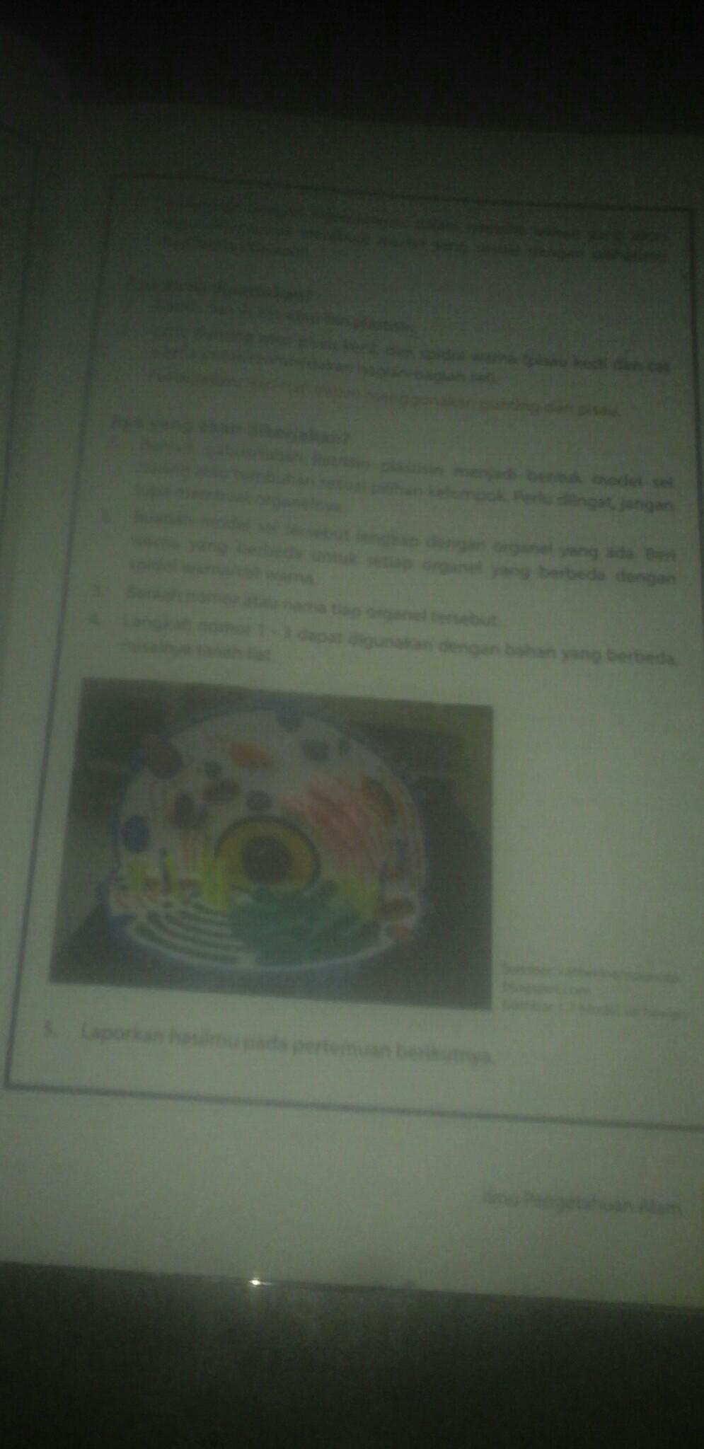 Fungsi Bagian Sel Hewan : fungsi, bagian, hewan, Tuliskan, Bagian, Hewan, Beserta, Fungsi, Brainly.co.id