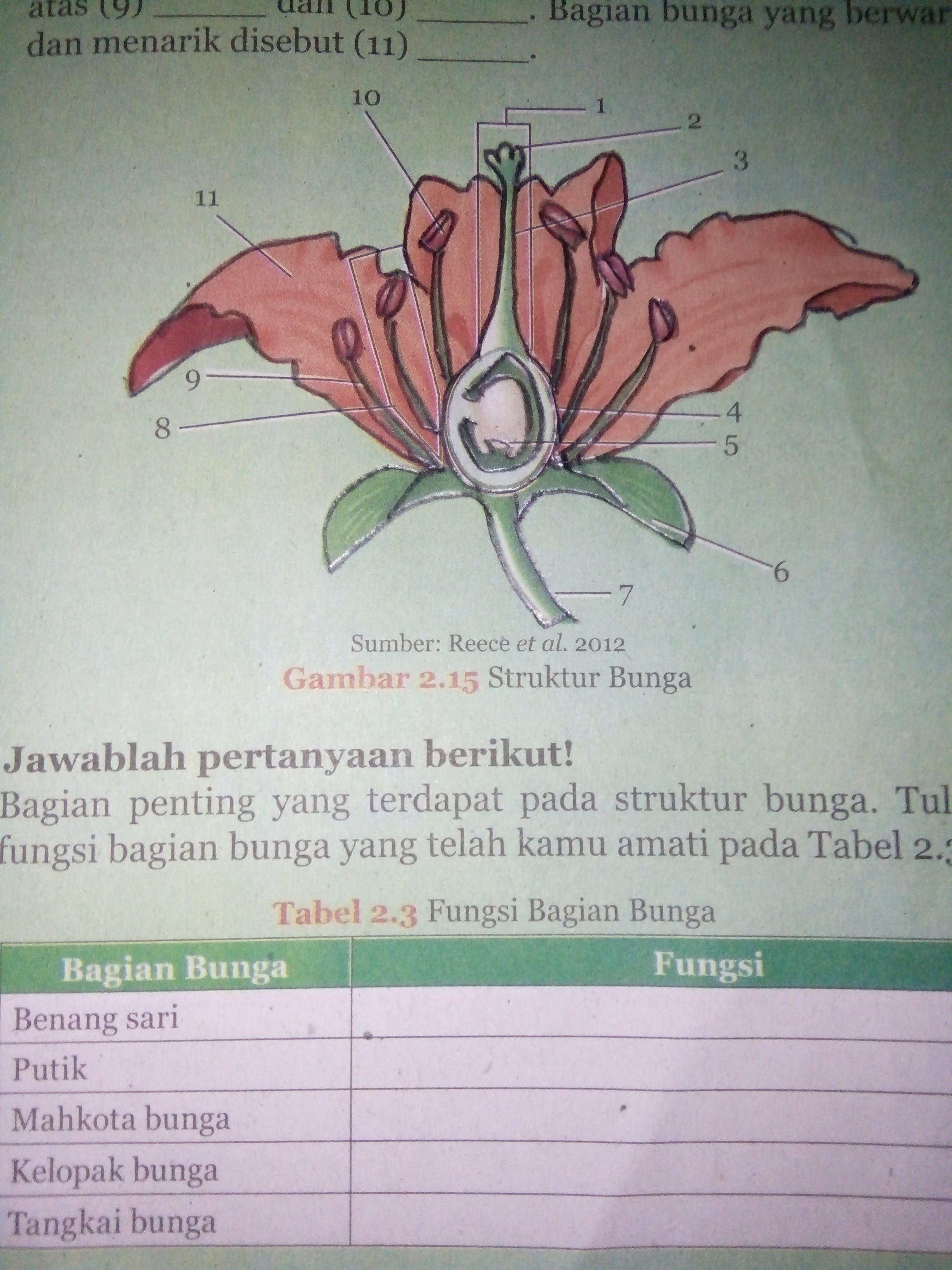 Struktur Bagian Bunga : struktur, bagian, bunga, Tuliskan, Bagian, Bunga., #please, Dijawab, Brainly.co.id
