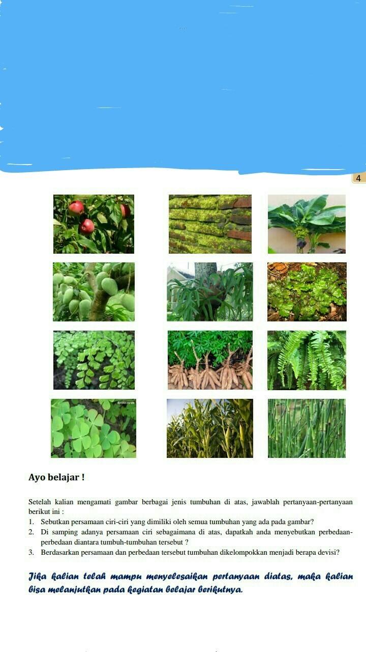 Sebutkan Ciri Ciri Tumbuhan Paku : sebutkan, tumbuhan, Sebutkan, Persamaan, Ciri-ciri, Dimiliki, Semua, Tumbuhan, Gambar, Tersebut?kak, Brainly.co.id