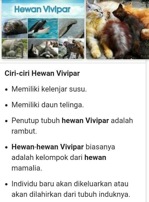 Contoh Hewan Vivipar - KOMPAS.com