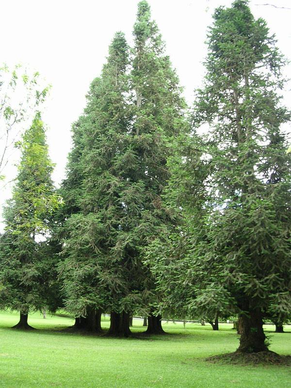 Hutan Berdaun Jarum : hutan, berdaun, jarum, Benua, Amerika, Wilayahnya, Banyak, Terdapat, Hutan, Berdaun, Jarum, Adalah, Wilayah...a., Pegunungan, Brainly.co.id