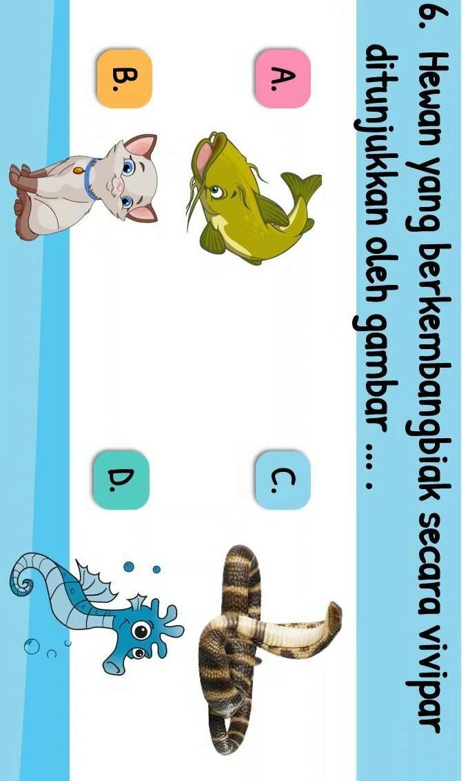 Hewan Vivipar : hewan, vivipar, Tolong, Bantu, Pelajaran, Kelas, Brainly.co.id