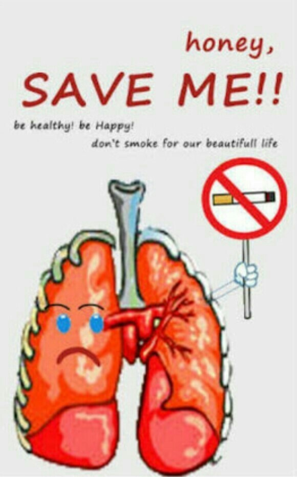 Poster Organ Pernapasan : poster, organ, pernapasan, Contoh, Gambar, Poster, Organ, Pernapasan, Candy, Photograph