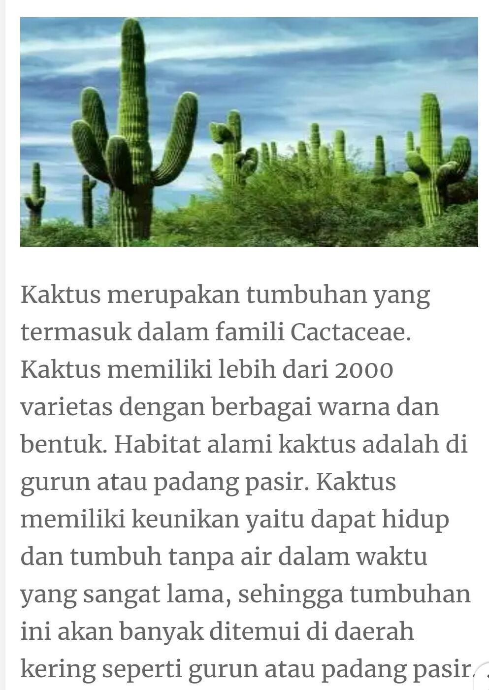 Ciri Khusus Kaktus : khusus, kaktus, Contoh, Poster, Pengamatan, Khusus, Kaktus, Brainly.co.id
