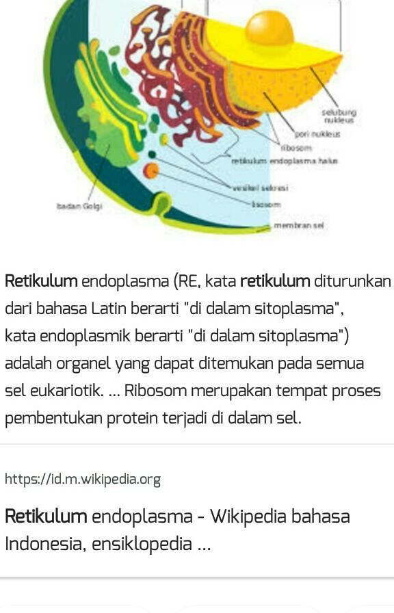 5 Fungsi Retikulum Endoplasma (Halus dan Kasar) | Portal