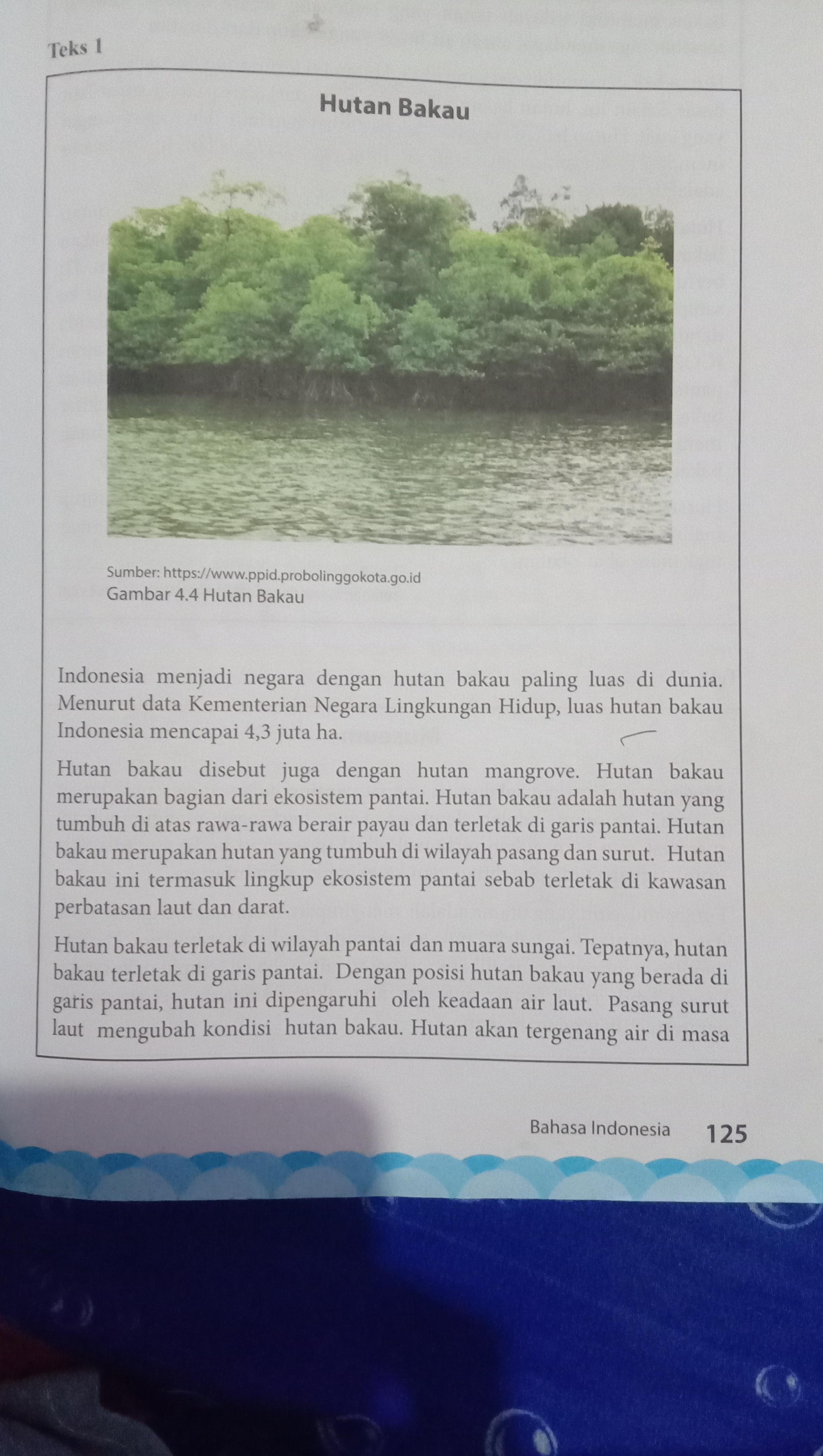Sebutkan Manfaat Hutan Mangrove : sebutkan, manfaat, hutan, mangrove, (hutan, Bakau), (museum), Setelah, Membaca, Diatas, Diskusikan, Hal-hal, Berikut!, Brainly.co.id