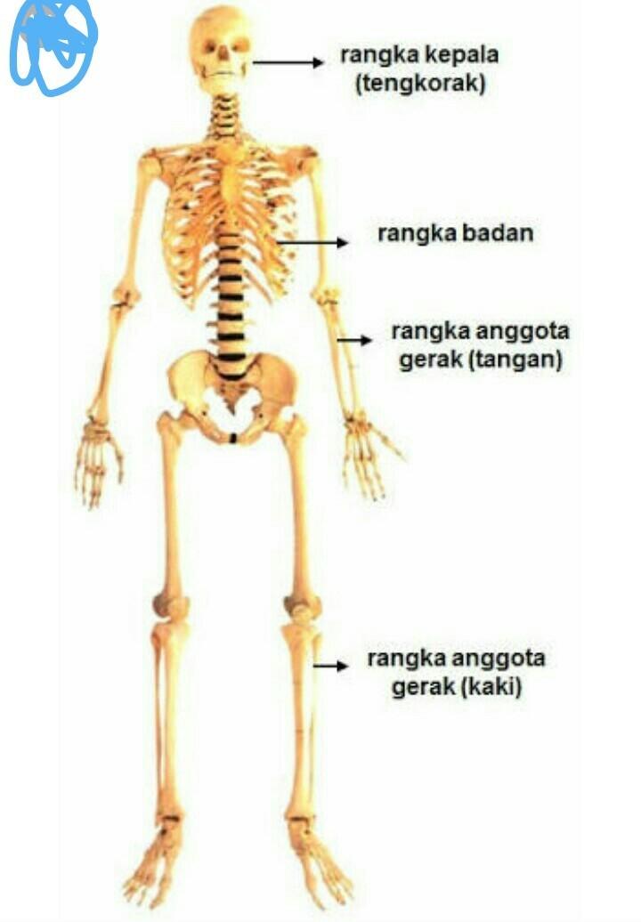 Rangka - Wikipedia Bahasa Melayu, ensiklopedia bebas
