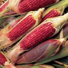 Amefurashi Bibit / Benih / Seeds Beauty Red Corn Jagung Merah