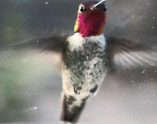 anna hummingbird_kindlephoto-17816289