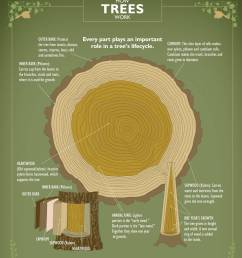 ifpc how trees work poster [ 1240 x 1440 Pixel ]
