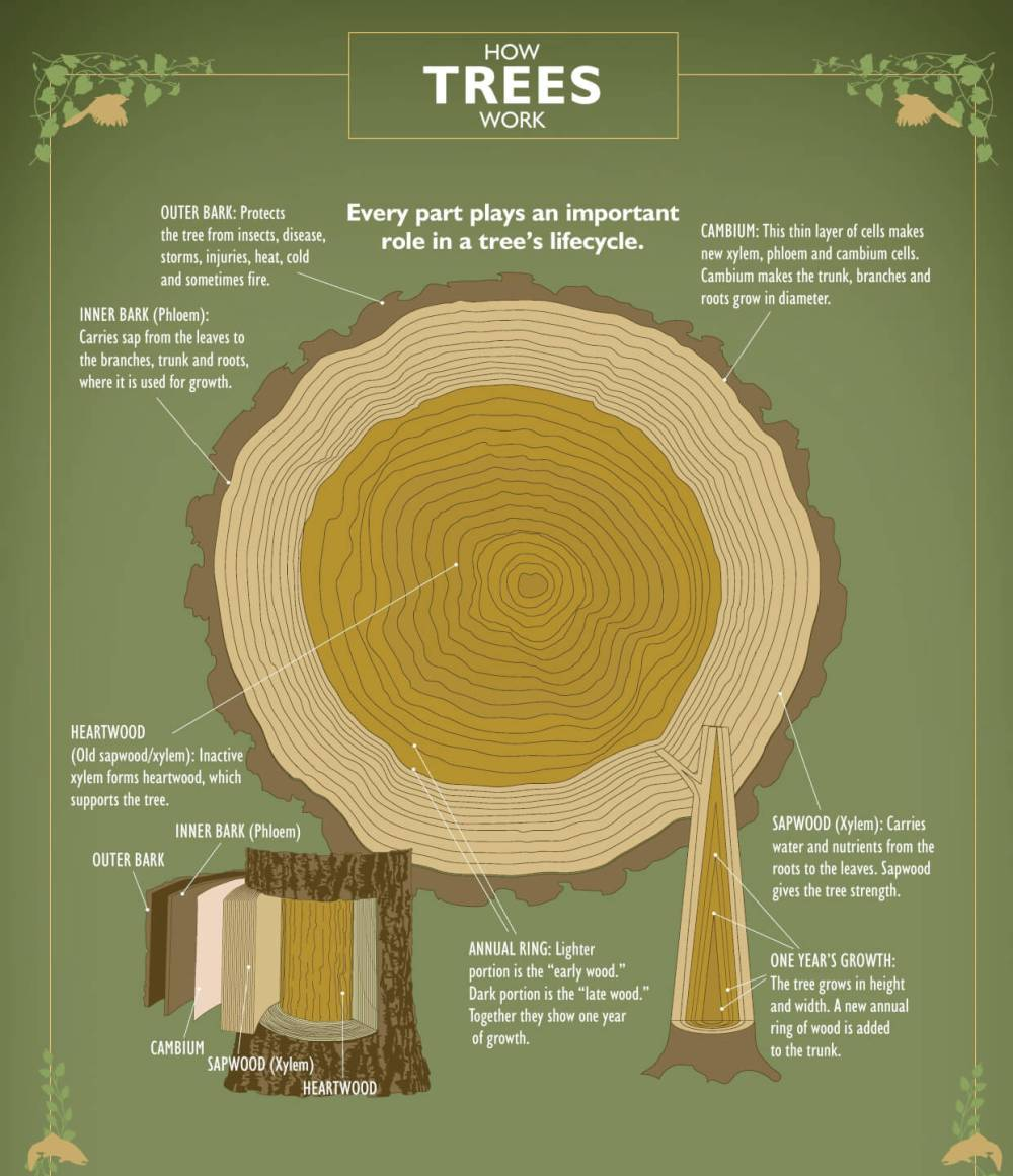 medium resolution of ifpc how trees work poster
