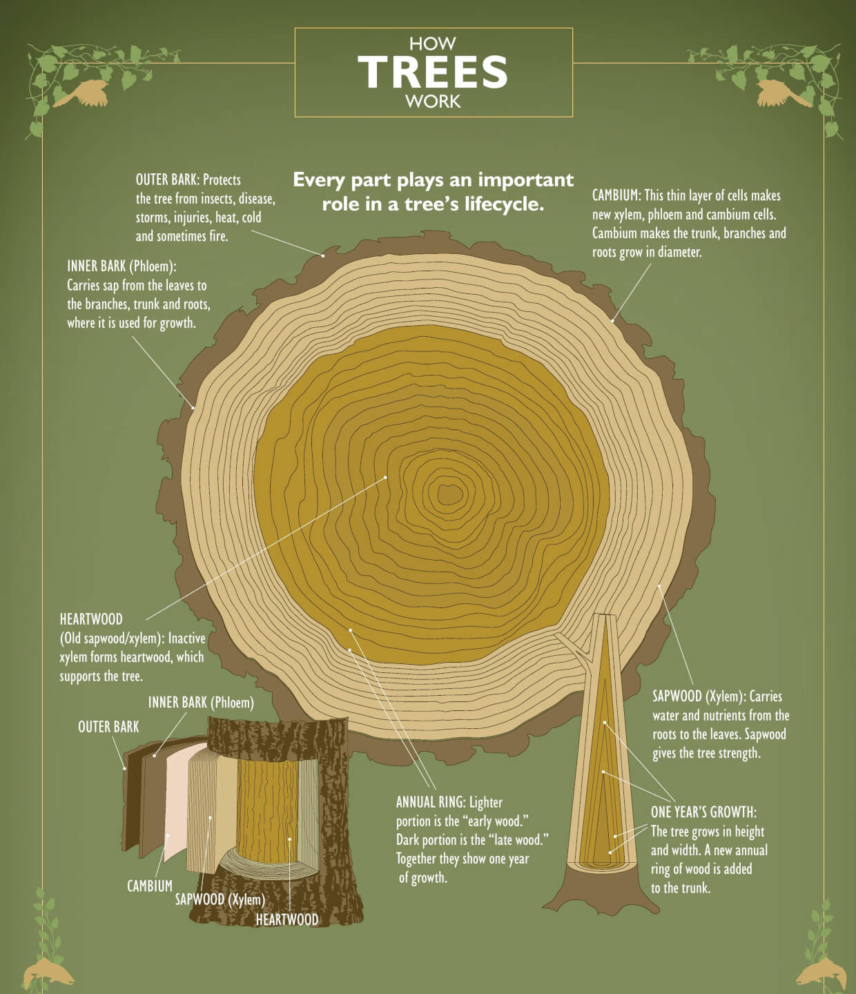 hight resolution of ifpc how trees work poster