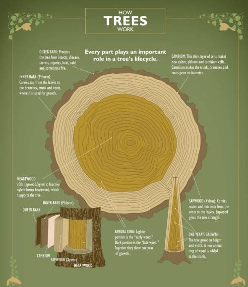 small resolution of ifpc how trees work poster
