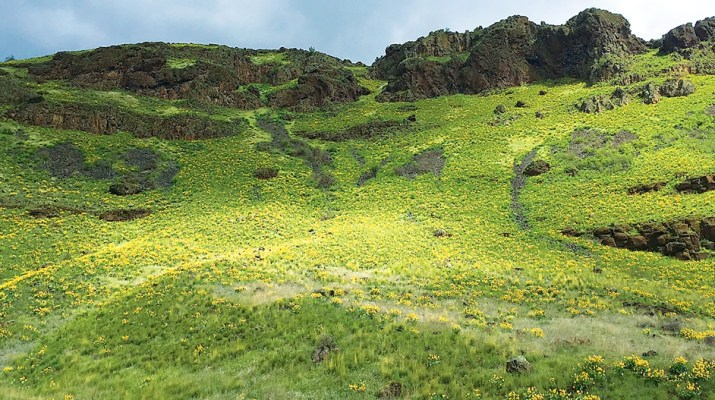 Idaho Senior Independent — Resurrecting The Historical Craig Mountain Trail
