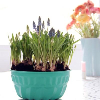 DIY: turn an old cake pan into a flower pot
