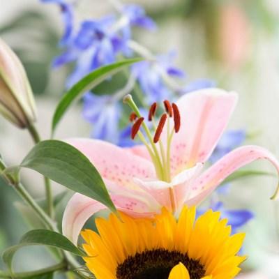 Flowers and Enea
