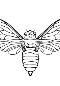 Butterflies - Free printable Coloring pages for kids1