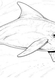 Dolphins - Free printable Coloring pages for kids19