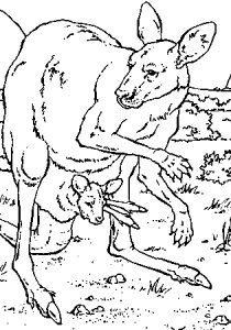 Kangaroos - Free printable Coloring pages for kids5