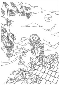 Owls - Free printable Coloring pages for kids1