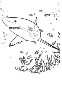 Sharks - Free printable Coloring pages for kids18