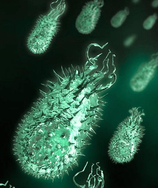 Микробы фото для детей