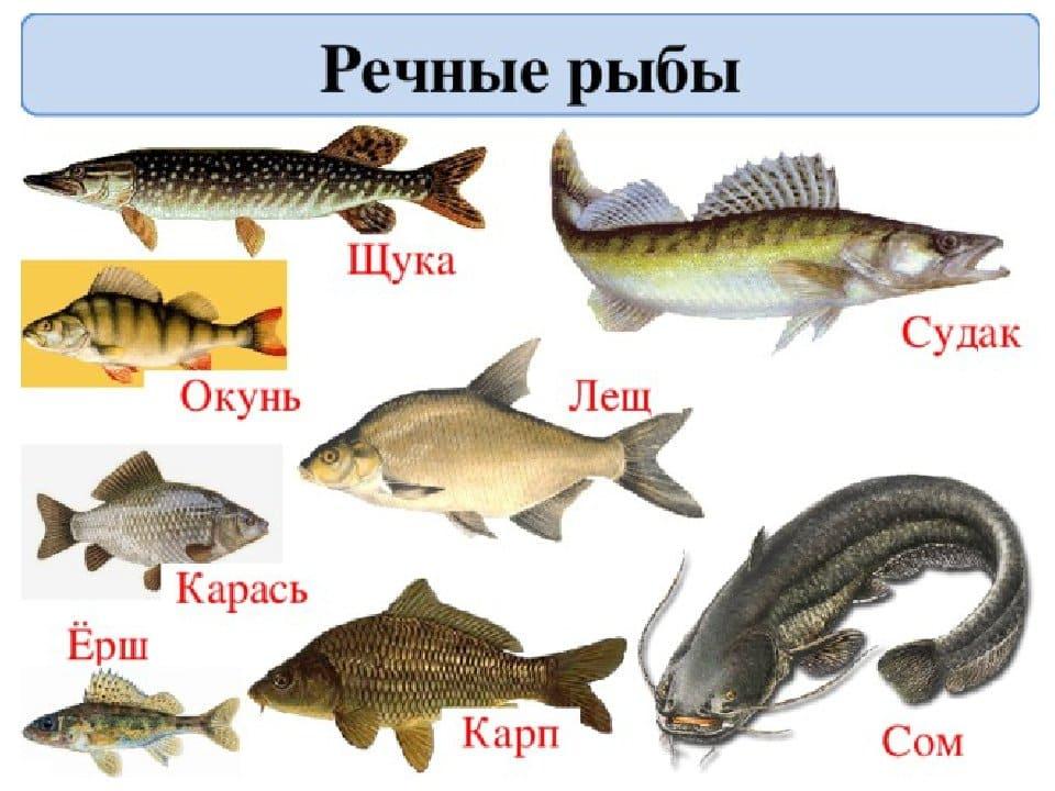 Речная рыба названия