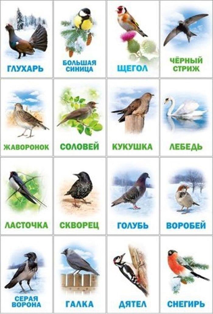 Птицы - фото с названиями для детей