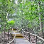 熱帯雨林の森 Singapore Botanic Gardens Learning Forest