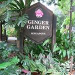 ジンジャー・ガーデン 生姜庭園 Ginger Garden