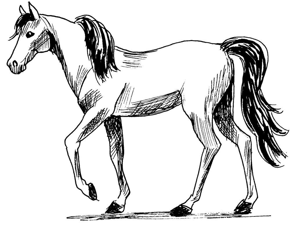 Cheval Dessin Jan 06 12 12 43 Picture Gallery