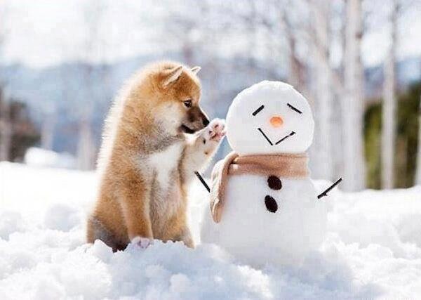 """Résultat de recherche d'images pour """"neige image rigolote"""""""
