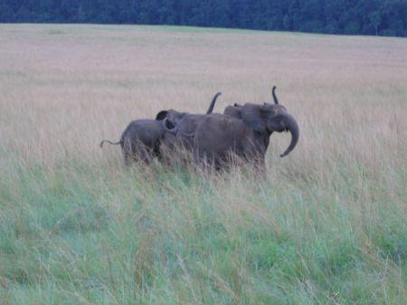 Eléphants de Nyonié