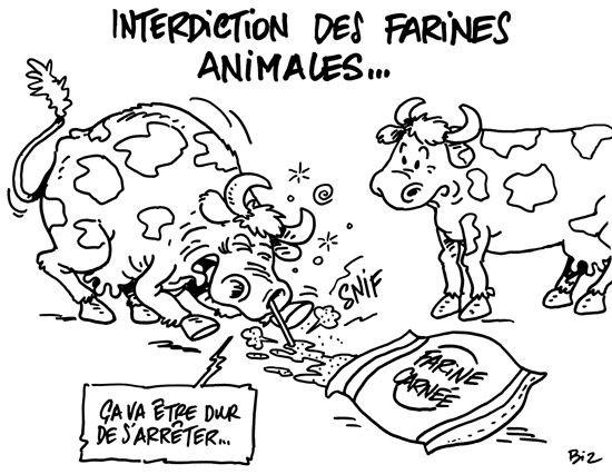 """Résultat de recherche d'images pour """"maladie de la vache folle"""""""